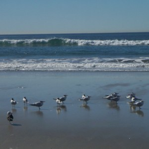 Sea birds at South Carlsbad State Beach in Carlsbad