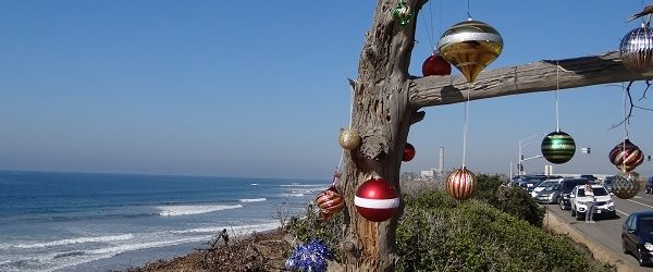 Old tree along the beach in Carlsbad decorated for the holidays
