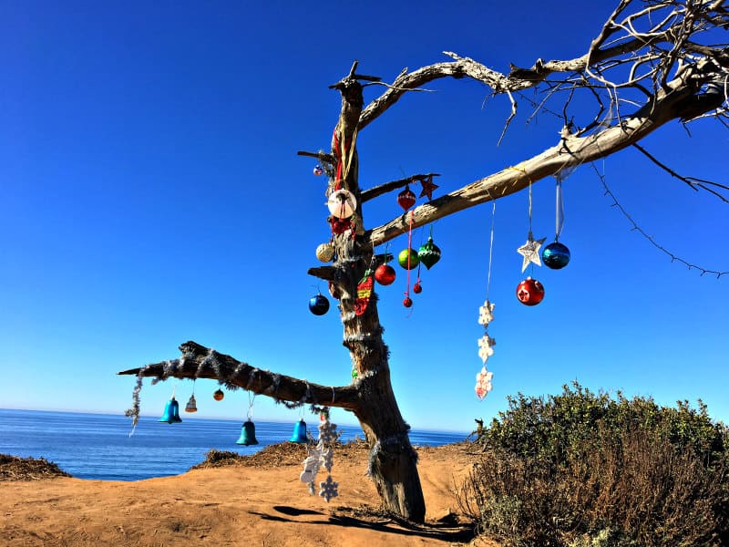 Tree decorated for Christmas on the Coast Road in Carlsbad